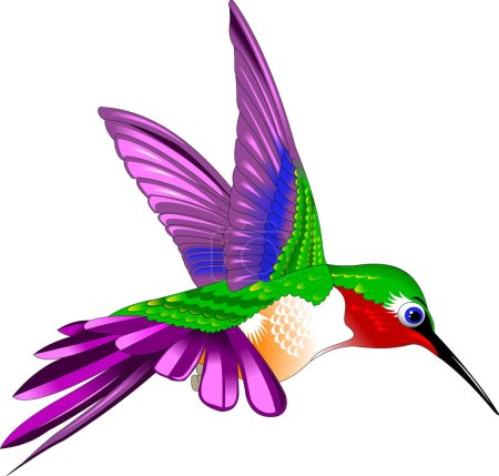 Hummingbird bird illustration