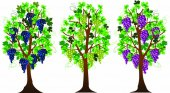 Three grape bushes of different varieties of grapes vector illustration