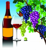 Three grape bushes of different varieties of grapes with bottle and vine glass vector