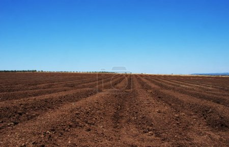 Photo for Furrows row pattern in a plowed land prepared for planting - Royalty Free Image
