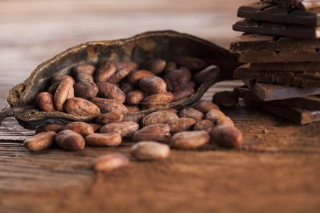 Cocoa pod and cocoa beans on the wooden table...