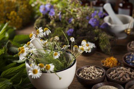 Fresh medicinal, healing herbs