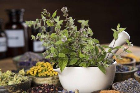 Photo pour Médecine alternative, herbes séchées fond - image libre de droit