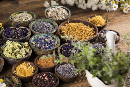 Photo pour Fresh medicinal herbs on wooden background - image libre de droit