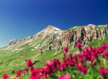 purple flowers on a hillside in the mountain landscape