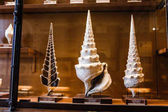 24 MARCH 2017, VIENNA, AUSTRIA: Fossiled sea shells Campanile giganteum in a showcase in the Museum of Natural History