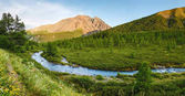 Beautiful view of mountain river in summer in Altai Mountains, Siberia