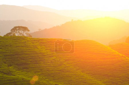 morning at Cameron highlands