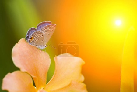beautiful butterfly on flower
