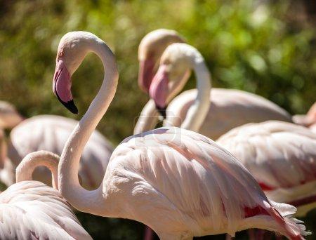 flamingo birds nearby a pond