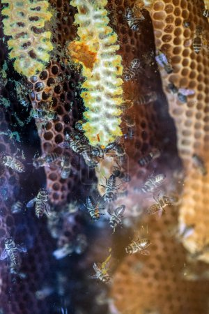 worker bees on a comb