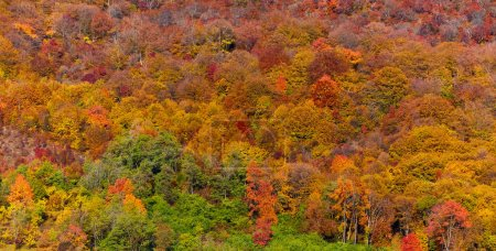 forest with deciduous trees