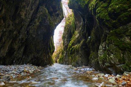 Photo pour Paysage avec une rivière qui coule à travers un canyon calcaire aux parois moussues - image libre de droit