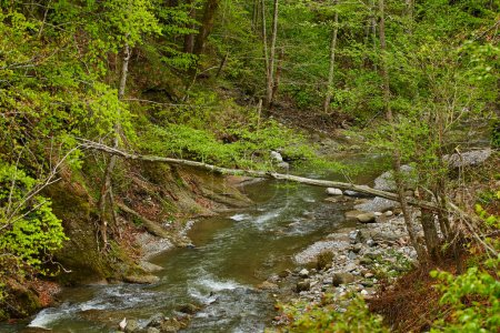 Photo for Mountain river flowing through forest and canyon - Royalty Free Image