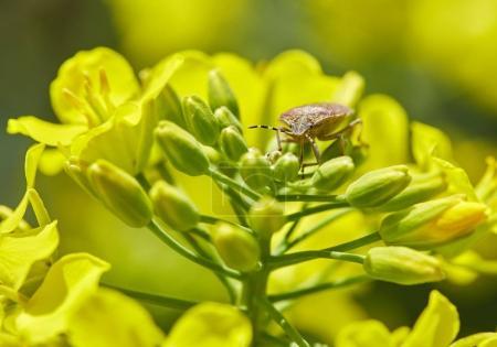 bug feeding on nectar
