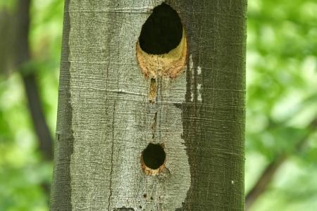 Bird nests in tree