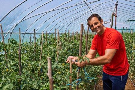 Farmer man on tomatoes