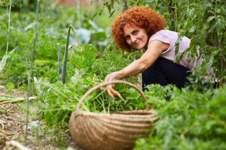 Woman farmer picking carrots