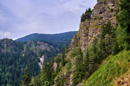 mountains covered with pine forest