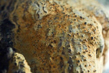 speleothemes in cave interior