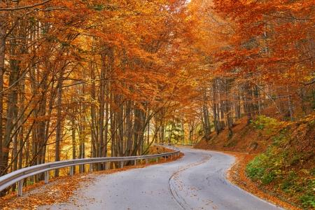 Asphalt road through colorful forest