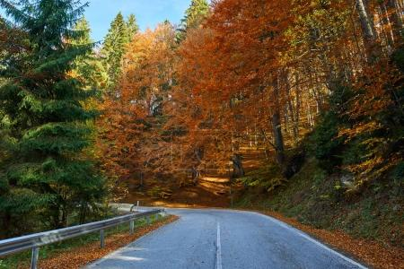 Asphalt road through colorful forest