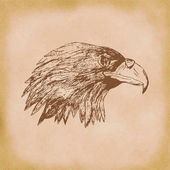 Eagle hand drawn