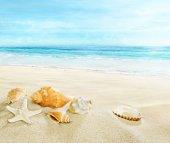Sandy beach with shells.