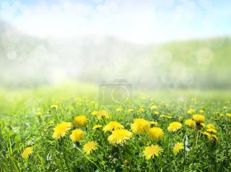 Photo for Spring nature background. The field of dandelions in the mountains. - Royalty Free Image