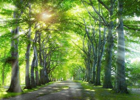Photo pour À travers la forêt. Fond naturel avec des arbres verts d'été . - image libre de droit