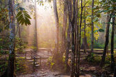 Beautiful tropical nature park