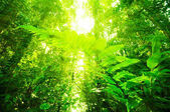 Natural tropical rainforest