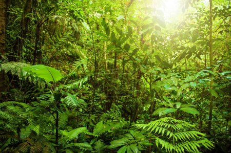 Photo for Fantastic tropical green forest landscape with sun flare in morning. - Royalty Free Image
