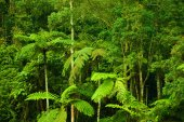 Tropical dense forest landscape