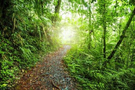 Foto de Principal camino de pie en bosque verde. - Imagen libre de derechos