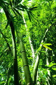 Bamboo forest vertical view