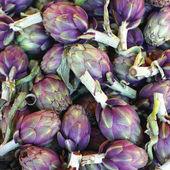 Purple Globe Artichokes