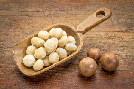 scoop of macadamia nuts