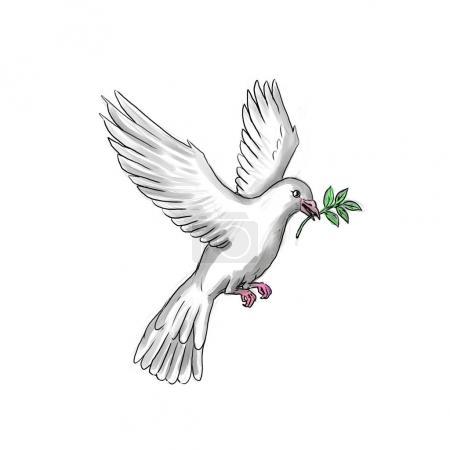Photo pour Illustration de style tatouage d'une colombe ou un pigeon volant avec rameau d'Olivier. - image libre de droit