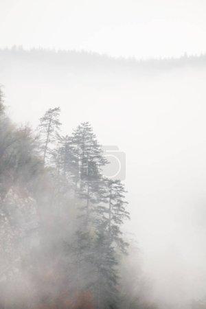 Photo pour Paysage de forêt d'automne brumeuse dans les collines de montagne en Slovénie - image libre de droit