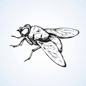 Fly Vector drawing