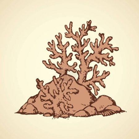 Corals of stones. Vector drawing