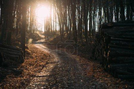 Sunshine trough the autumn  forest