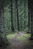Narrow path in dark forest