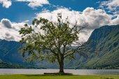 One tree and beautiful lake with mountains. Lake Bohinj, Slovenia.