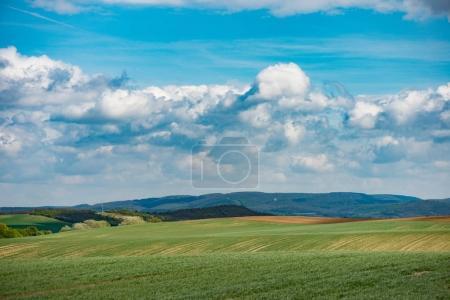 Photo pour Paysage d'été, prairie couverte d'herbe majestueuse . - image libre de droit