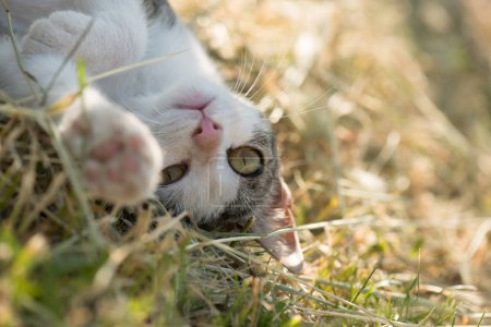 Photo for Cute funny cat playing outdoor. Playful cat. - Royalty Free Image
