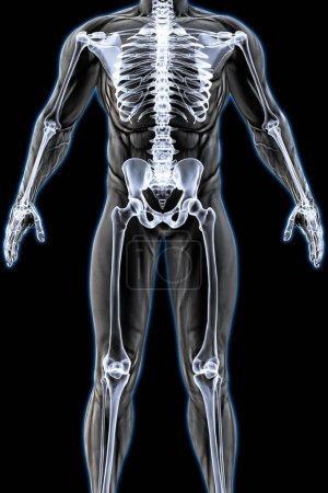 male body under X-ray