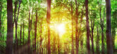 Panorama of green mountain forest with the sunlight through the