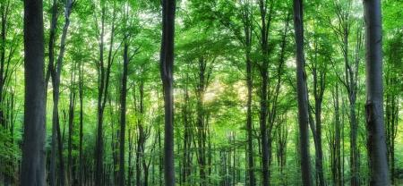 Photo for Panorama of green mountain forest with the sunlight through the trees background, sunset shot - Royalty Free Image